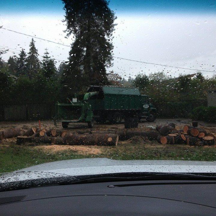 service-stump-grinding